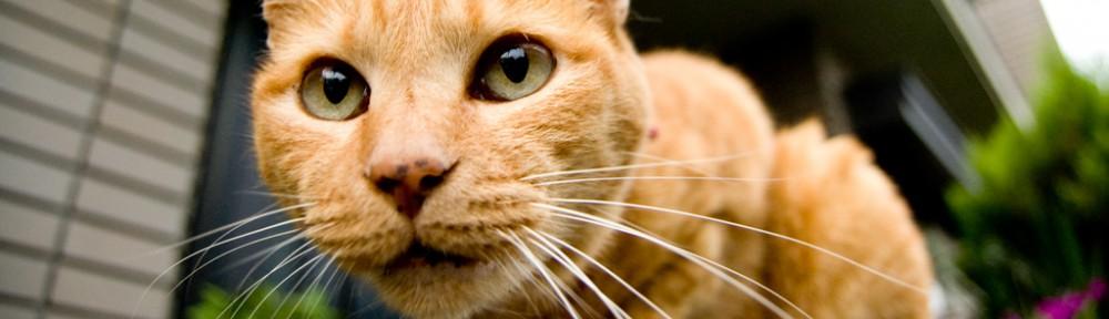 猫びより – ちょっとお洒落な大人のねこマガジン
